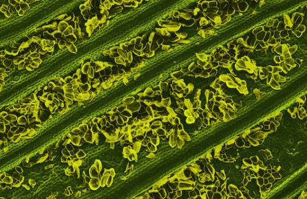 Caren Alpert's image of a pineapple leaf